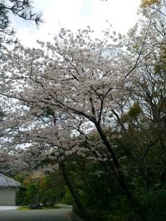 2014-04-04 10.30.40.jpg