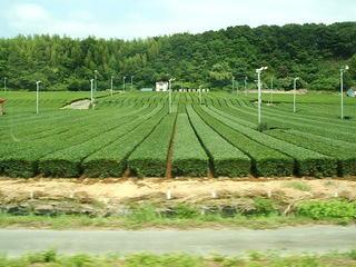 秋野不矩美術館 (4).JPG